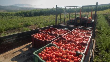En de prijs voor beste tomatenpassata gaat naar: Valdibella