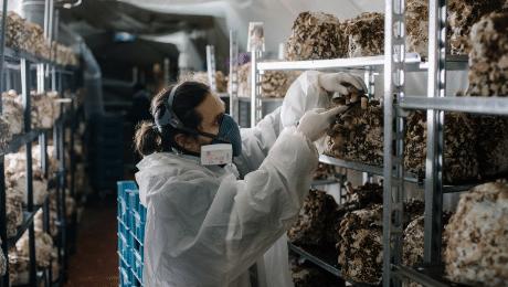 Le Champignon de Bruxelles: hoe bier de circulaire economie voor shiitakes rond maakt