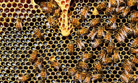 Wat is het verschil tussen gewone en rauwe honing