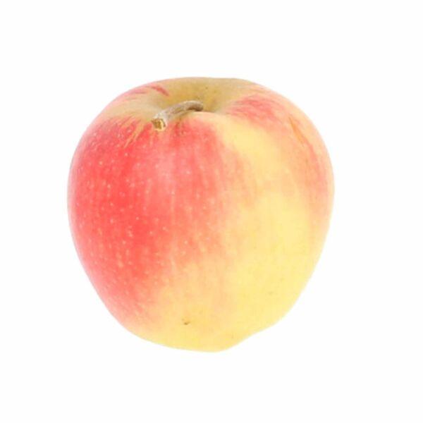 Belgica appel