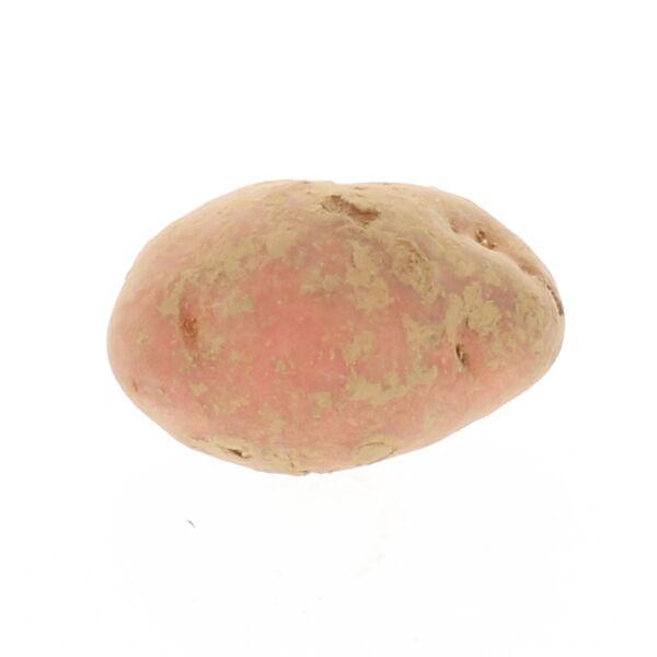 Désirée aardappel