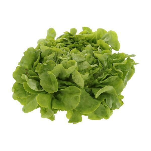 Groene eikenbladsla