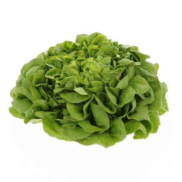 Groene Salanova - Botersla