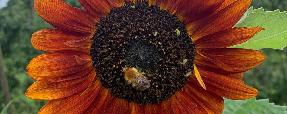 bioboer danny billen bio appel
