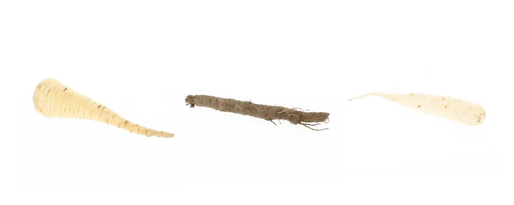 biologische-wintergroenten-op-een-rijtje-3