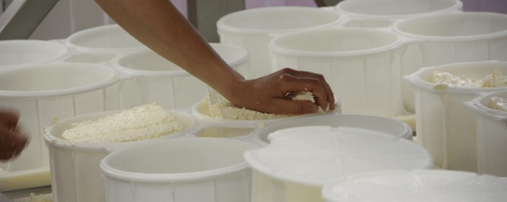 bio kazen kopen rauw ongepasteuriseerd